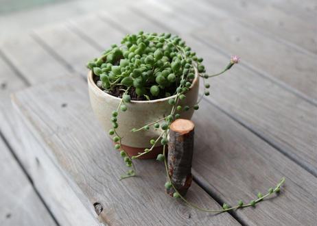 森のコーヒーカップ with グリーンネックレス