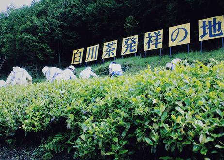 【数量限定】東白川村在来茶「在来2019」「在来2020」2種セット(各25g)