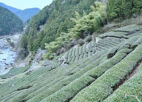 【特別価格】ほうじ茶ラテセット(黒茶筅 + ラテ用粉末ほうじ茶)