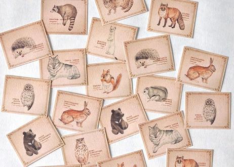 森の動物の小さな図鑑風メッセージカードBOX