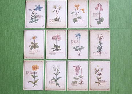 ちょっと大きめ*高山植物の図鑑風メッセージカード