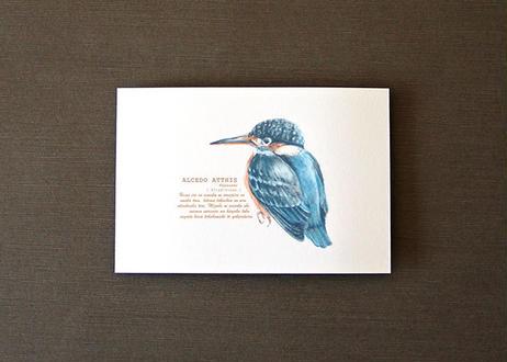 カワセミのポストカード