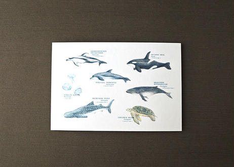 海の生き物たちのポストカード