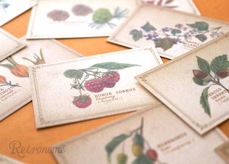 ちょっと大きめ*木の実の図鑑風メッセージカード