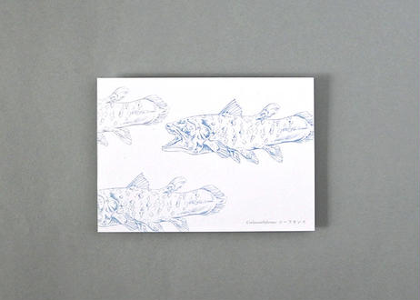 深海生物のポストカード(シーラカンス)