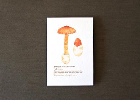 タマゴタケのポストカード