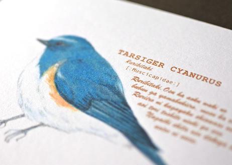 野鳥のポストカード4種セット