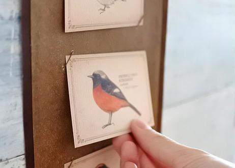 ちょっと大きめ*野鳥の図鑑風インテリア