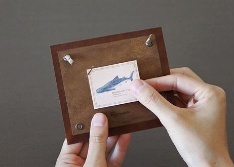 海の生き物の小さな図鑑風インテリア