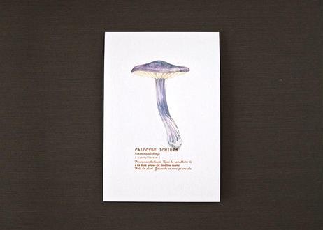 ヒメムラサキシメジのポストカード
