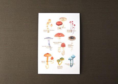 きのこたちのポストカード