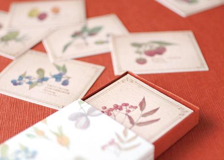 木の実の小さな図鑑風メッセージカードBOX