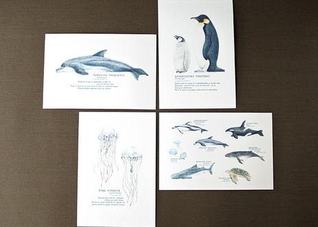 海の生き物のポストカード4種セット