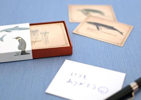 海の生き物の小さな図鑑風メッセージカードBOX