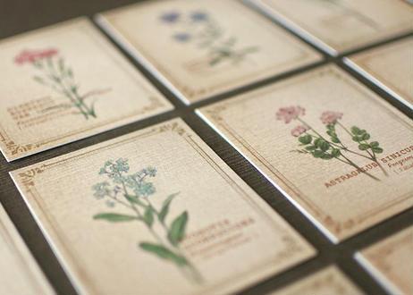 野の花の小さな図鑑風メッセージカードBOX