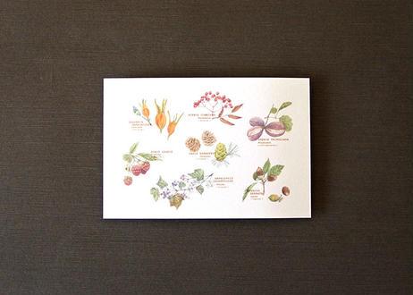 木の実たちのポストカード
