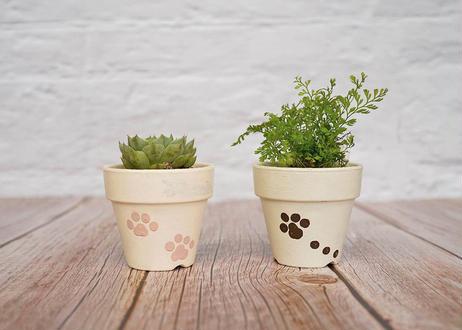 猫肉球の鉢植え *受注生産*
