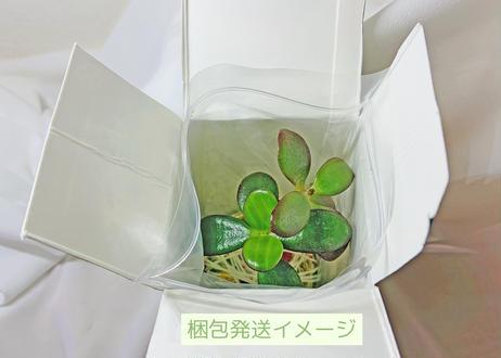 「新生活のはじまりに」セット(クオ・ヴァディス & ぱらだいすかふぇ)
