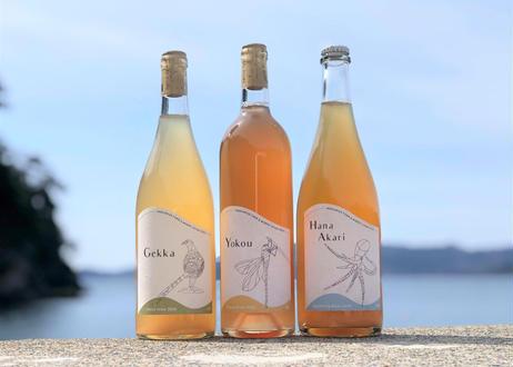 ★定期便★毎月ワインをお届け! 3種12本セット