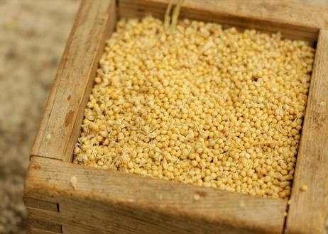 在来雑穀 と お米 * 森のおすそわけ *