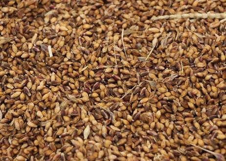 在来雑穀 と お米 と めんぱ * 森のおすそわけ *