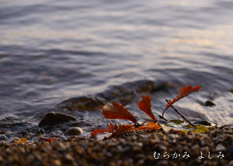 水際にみる景色