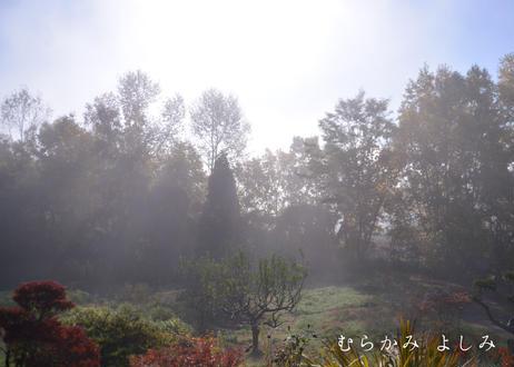 光の降り注ぐ朝