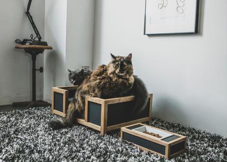GOTHAM / pet bed [ウォールナット×ネイビー]