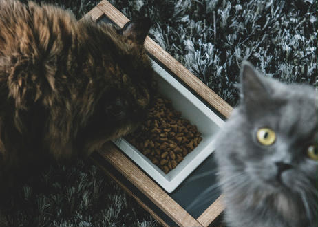 GOTHAM / pet feeder [ウォールナット]