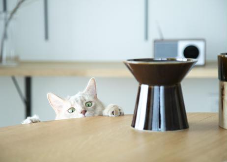 CHALICE / food bowl [飴]