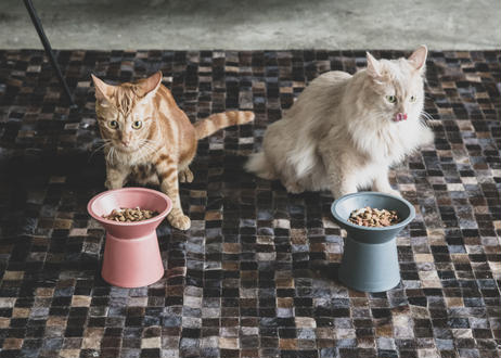 CHALICE / food bowl [ダークグレー]