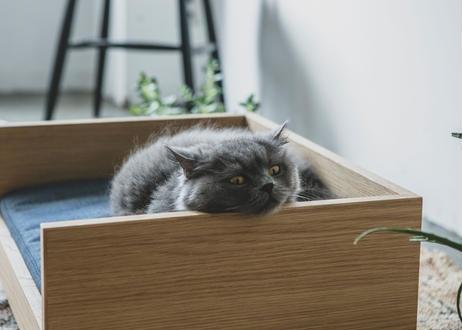 MALTA / pet bed [オーク×ブラウン]