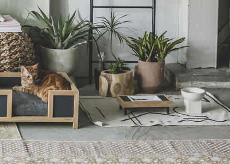 MALTA / pet feeder [ウォールナット]