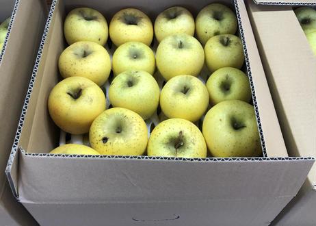 【訳ありでもおいしい】信州りんご シナノゴールド12㎏ 35~40玉入【送料無料】