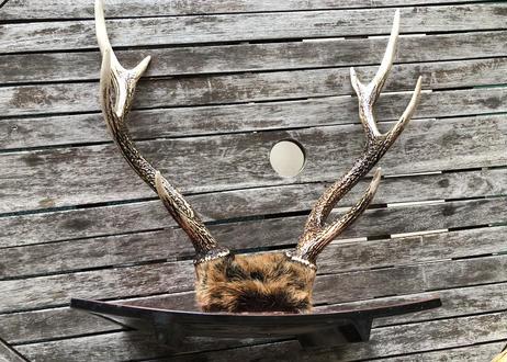 鹿の角 刀掛け