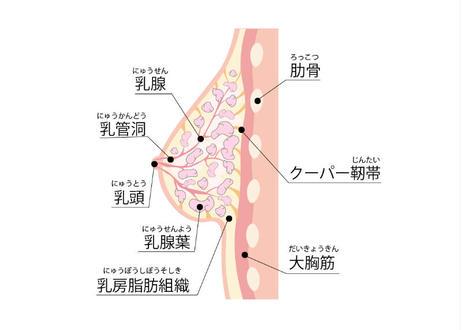 【バストボリュームアップエネルギー 1回30分間】