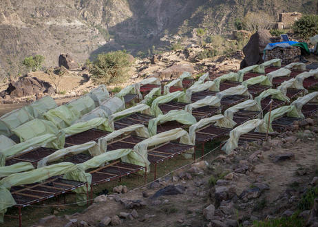 [100g Yemen Yemenia Special Reserve] イエメニア バニ・ナヒミ限定ロット