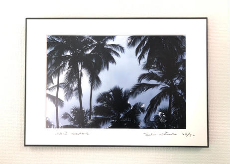 写真パネル<椰子の木漏れ日>直筆サイン付き 限定50枚
