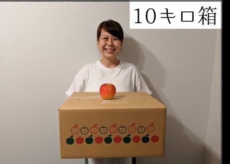 C6 シナノスイート 10キロ箱 たっぷり小玉(40~46玉) 特秀(贈答用)