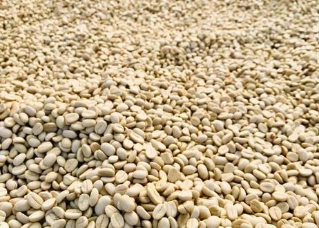 ニカラグア マイクロロット ペラルタ農園 El Bosque Java ウォッシュ 200g