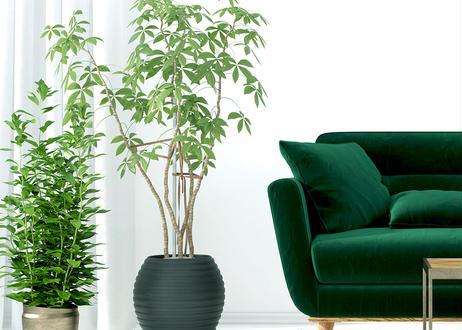 緑がつくるやわらかな時間<オーダー制:植物のコーディネート>