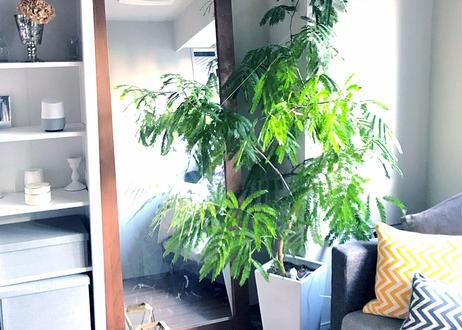 【東京23区限定】緑がつくるやわらかな時間<オーダー制:植物のコーディネート>