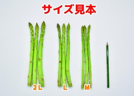 今金産グリーンアスパラ【サイズ:ML混み】【内容量:1kg】