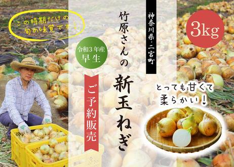 春の味覚! 獲れたて新玉ねぎ3kg【予約販売】【お届けは5月中旬~】送料込み(商品コード:TF370199)