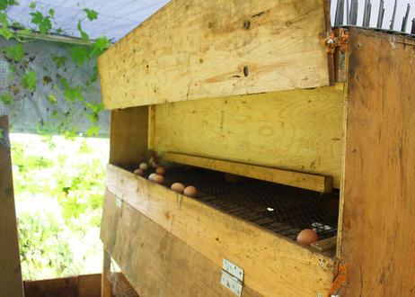 【コッコパラダイス】平飼いアローカナの卵 1パック(4個入り)(商品コード:TF440273)