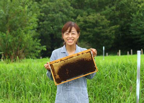 【茅ヶ崎・マカナ養蜂園】国産純粋生はちみつ《数量限定》(商品コード:TF560381)