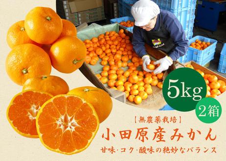 送料込【無農薬栽培】小田原産みかん 5kg 2箱 (商品コード:TF090316)