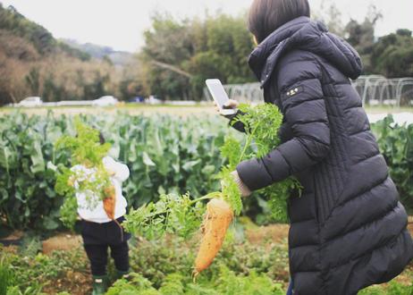 【(おとな)8/26(木)】畑で収穫体験&ごはん会【愛知県南知多町】
