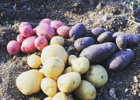 【夏の旬野菜ミニセット】オクラ、ナス、クウシンサイなど【5〜7品目】