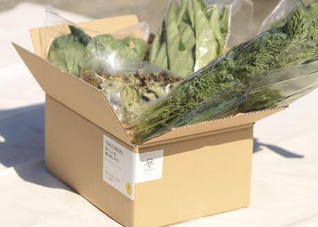 【春の旬野菜セット】スティックセニョール、キャベツ、ダイコンなど【6〜8品目】